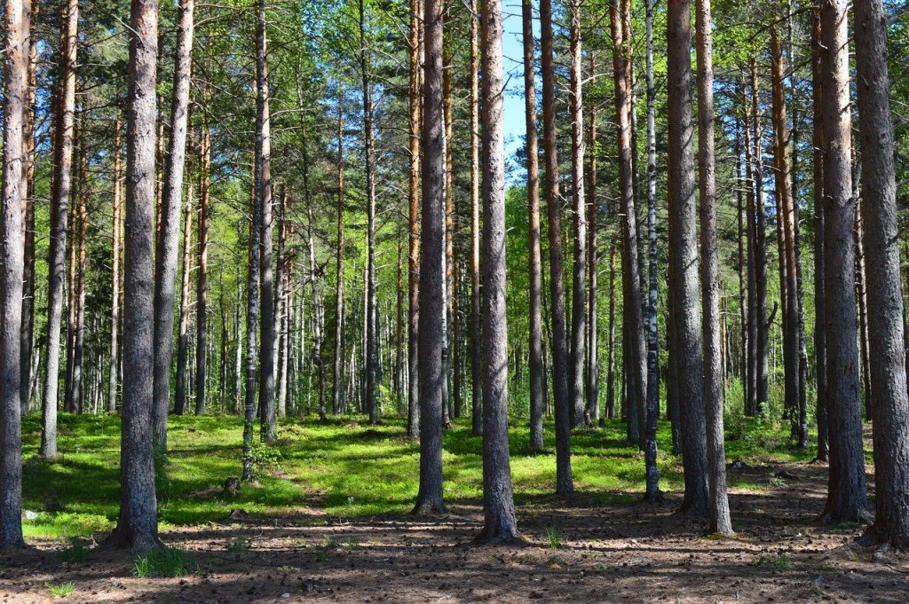 forest, trees, landscape
